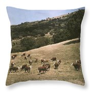 In A Pasture Near Pleasanton Hereford Throw Pillow