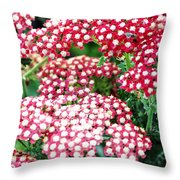 In A World So Small Throw Pillow