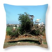 In Morocco Goats Grow On Trees Throw Pillow