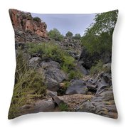 In The Arroyo   Throw Pillow by Ron Cline