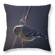 In The Early Morning Light Throw Pillow