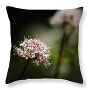 In The Quiet Of The Morning Throw Pillow