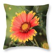 Indian Blanket Flower Throw Pillow