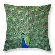 Indian Peafowl Pavo Cristatus Male Throw Pillow