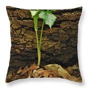 Indian Turnip 5582 0240 Throw Pillow