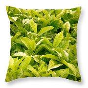 Indian Variety Of Tea Throw Pillow