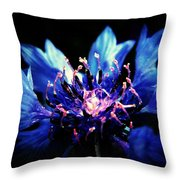 Indigo Bachelor  Throw Pillow