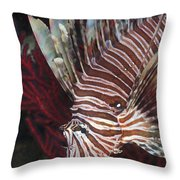 Indonesian Lionfish On A Wreck Site Throw Pillow
