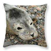 Injured Harbor Seal Throw Pillow