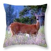 Inquisitive Doe Throw Pillow