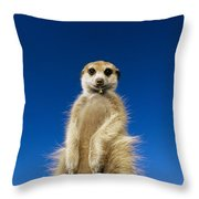 Insect Remains Hang On The Lips Throw Pillow