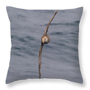 Into The Wind Throw Pillow