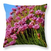 Ireland Close-up Of Seapink Wildflowers Throw Pillow
