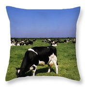 Ireland Friesian Cattle Throw Pillow