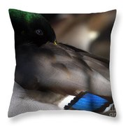 Iridescent Blue Throw Pillow by Sharon Talson