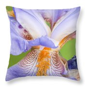 Iris Close Up Blue And Gold Throw Pillow