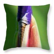 Iris Bud 1 Throw Pillow