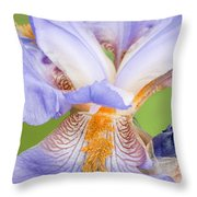 Iris Full Bloom Throw Pillow