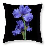 Iris On Black Throw Pillow