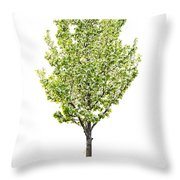 Isolated Flowering Pear Tree Throw Pillow