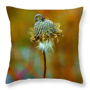 Isolated Locoweed Throw Pillow