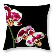 Isolated Orchids Throw Pillow