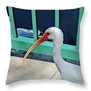 Ivis Ibis And Packy Throw Pillow
