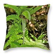 Jack-in The-pulpit_4588 Throw Pillow
