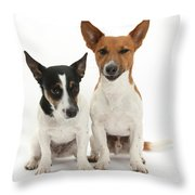 Jack Russell Terrier Dog, Rockie Throw Pillow