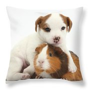 Jack Russell Terrier Puppy And Guinea Throw Pillow