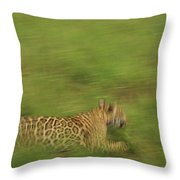 Jaguar Panthera Onca Running Throw Pillow