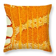 Jamaican Dogwood Vessels And Fibers Throw Pillow