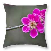 Japanese Flowering Apricot. Throw Pillow