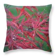 Japanese Red Leaf Maple Hybrid Throw Pillow