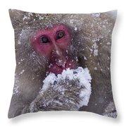 Japanese Snow Monkey Throw Pillow