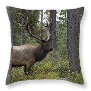 Jasper National Park, Jasper, Alberta Throw Pillow
