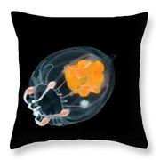 Jellyfish Leuckartiara Sp, Weddell Sea Throw Pillow