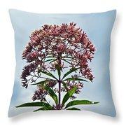 Joe-pye Weed Wildflower - Eupatorium Throw Pillow