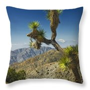Joshua Trees Number 357 Throw Pillow