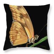 Julia Butterfly Dryas Iulia Portrait Throw Pillow