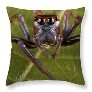 Jumping Spider Papua New Guinea Throw Pillow by Piotr Naskrecki