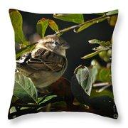 Junior Sparrow Throw Pillow