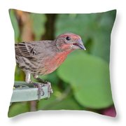 Just A Snack Throw Pillow