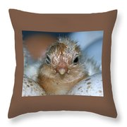 Just Hatched Throw Pillow