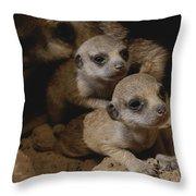Just Waking Up, Two Meerkat Pups Throw Pillow
