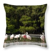 Juvenile And Adult Roseate Spoonbills Throw Pillow