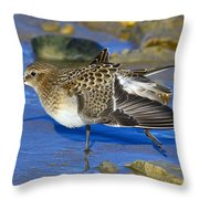 Juvenile Baird's Sandpiper Throw Pillow