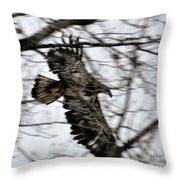 Juvenile Bold Eagle Throw Pillow