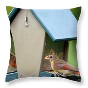 Juvenile Cardinals On Feeder Throw Pillow