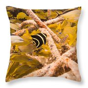 Juvenile French Angelfish Among French Throw Pillow